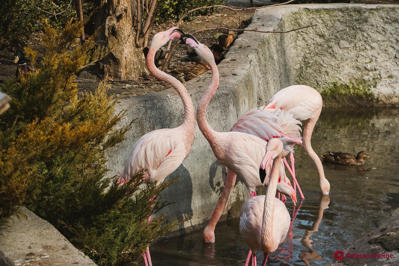 За год одесский зоопарк посетили более 300 тысяч гостей