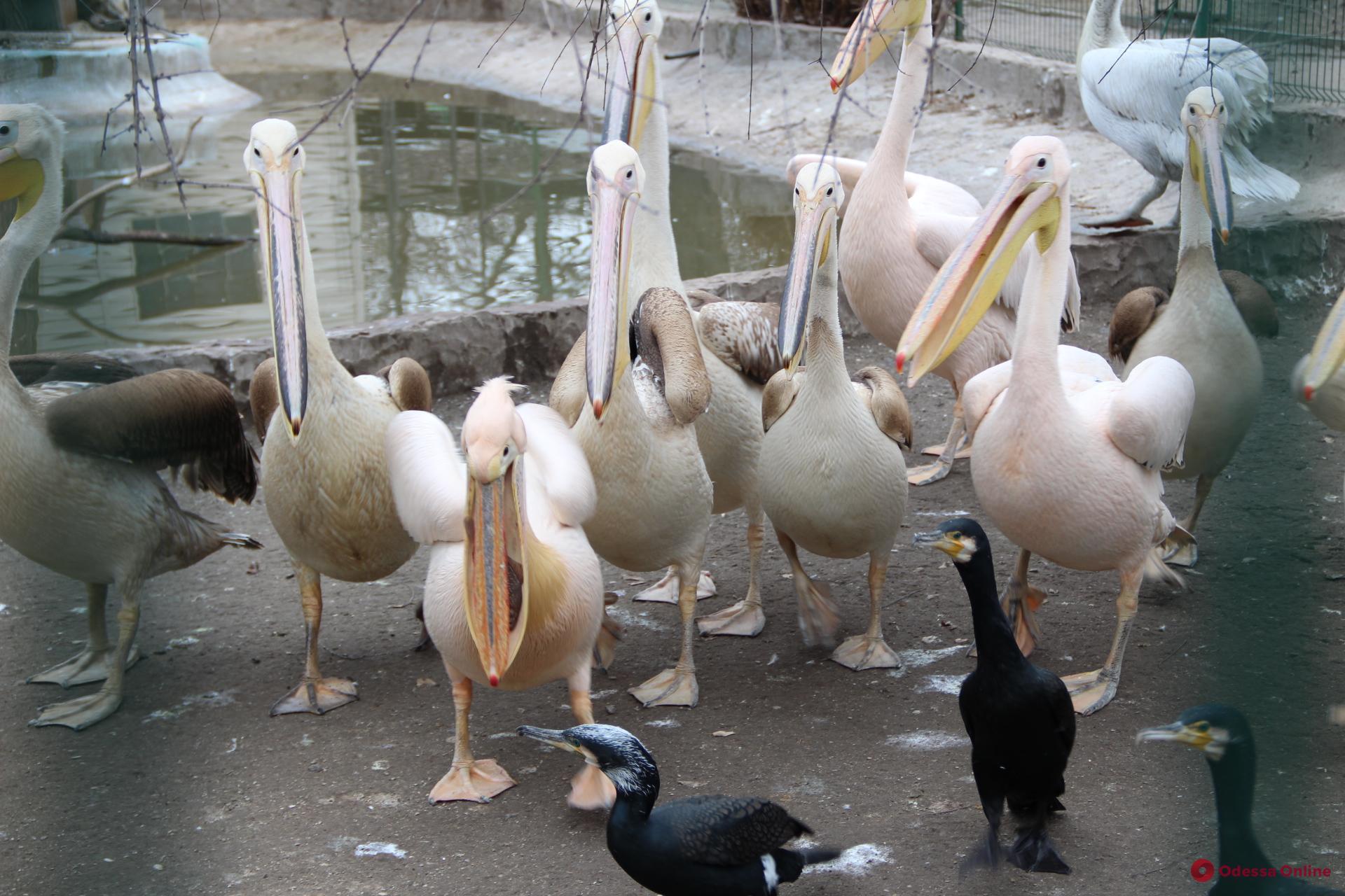 В одесском зоопарке выбрали пару года