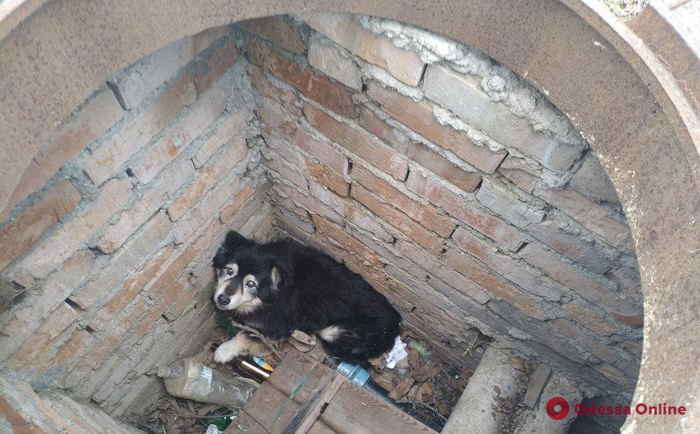 В Одесской области спасли упавшую в открытый люк собаку