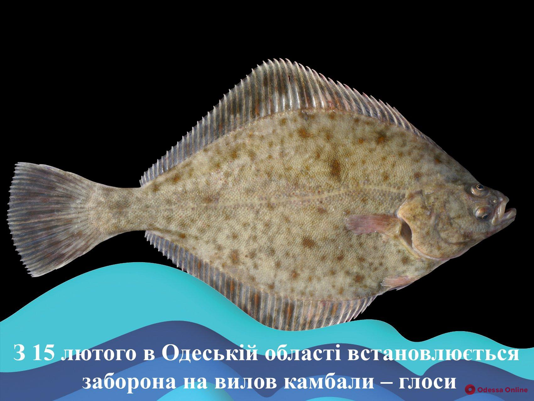 Рыболовам на заметку: в Одесской области вводится запрет на вылов камбалы