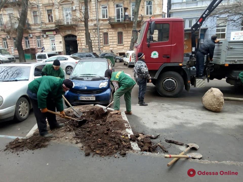 В Одессе на три десятка деревьев стало больше