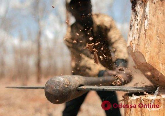 В одесской мэрии подсчитали ущерб от вырубки деревьев на территории детского санатория