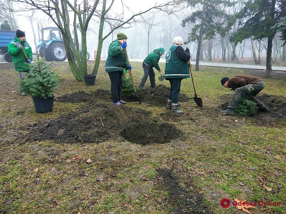 С начала года в Одессе высадили 118 молодых деревьев