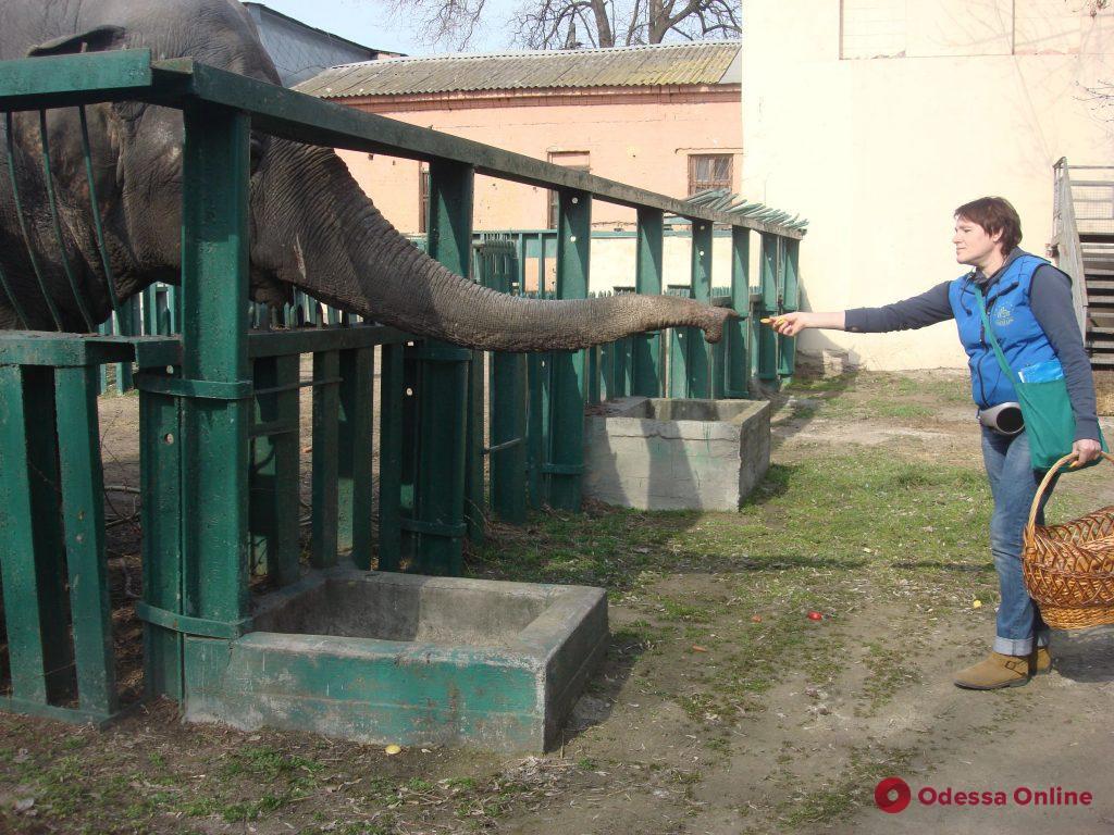 В Одесском зоопарке встречали весну