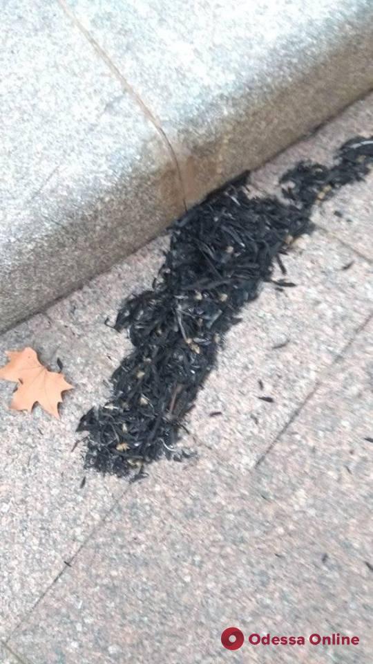 В районе Большевика горит камыш