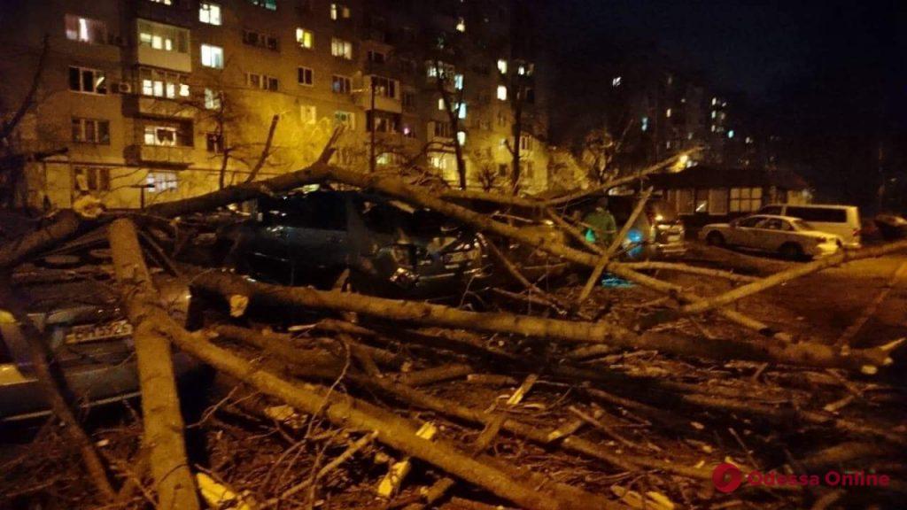На Таирова рухнувшее дерево повредило пять автомобилей