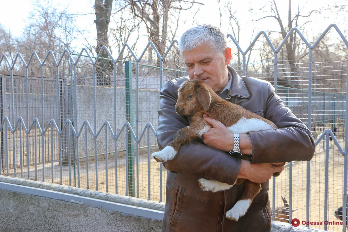 Дикобразы, козы и мунтжаки: в Одесском зоопарке начался бэби-бум