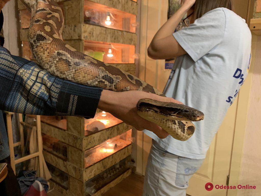 Одесская биолог, террариумист и дважды мама: как живет владелица более двухсот змей