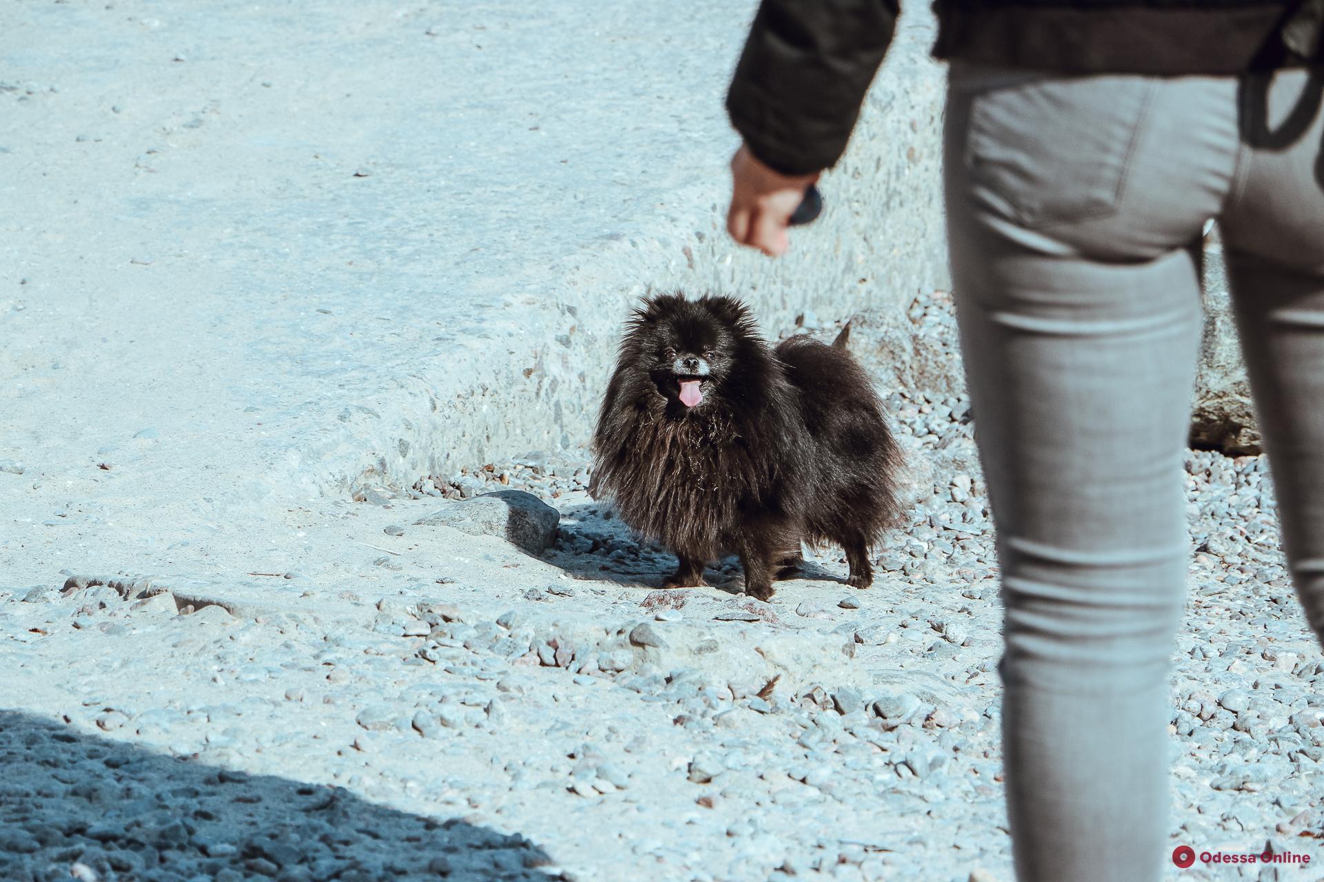 Прогулка по весенней Аркадии (фоторепортаж)