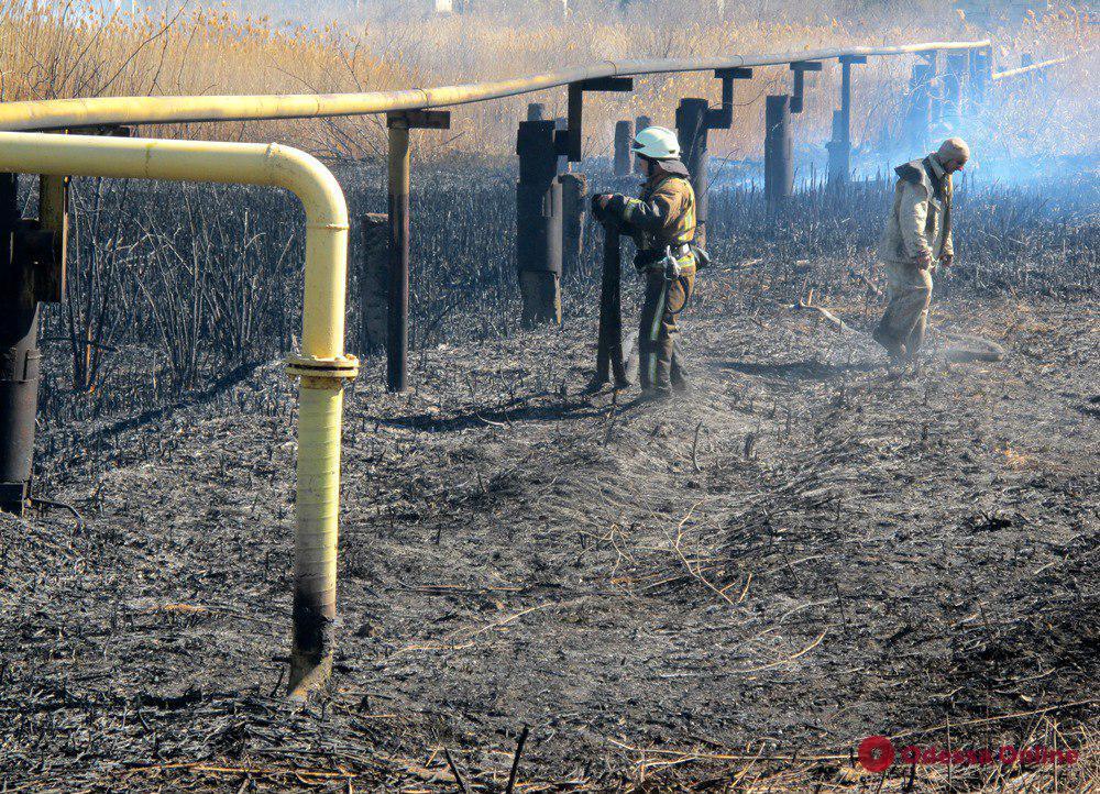В Одессе снова горел камыш