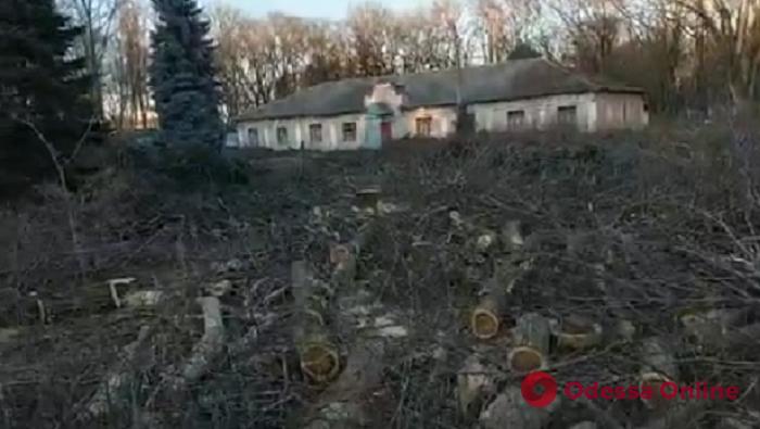 Одесса: на территории детского санатория незаконно вырубили больше сотни деревьев