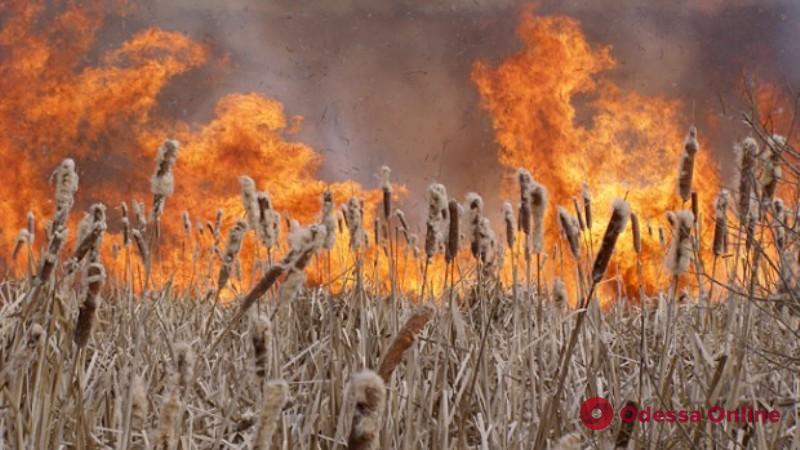 В Затоке тушили большой пожар — с сухой травы огонь перекинулся на территорию кемпинга
