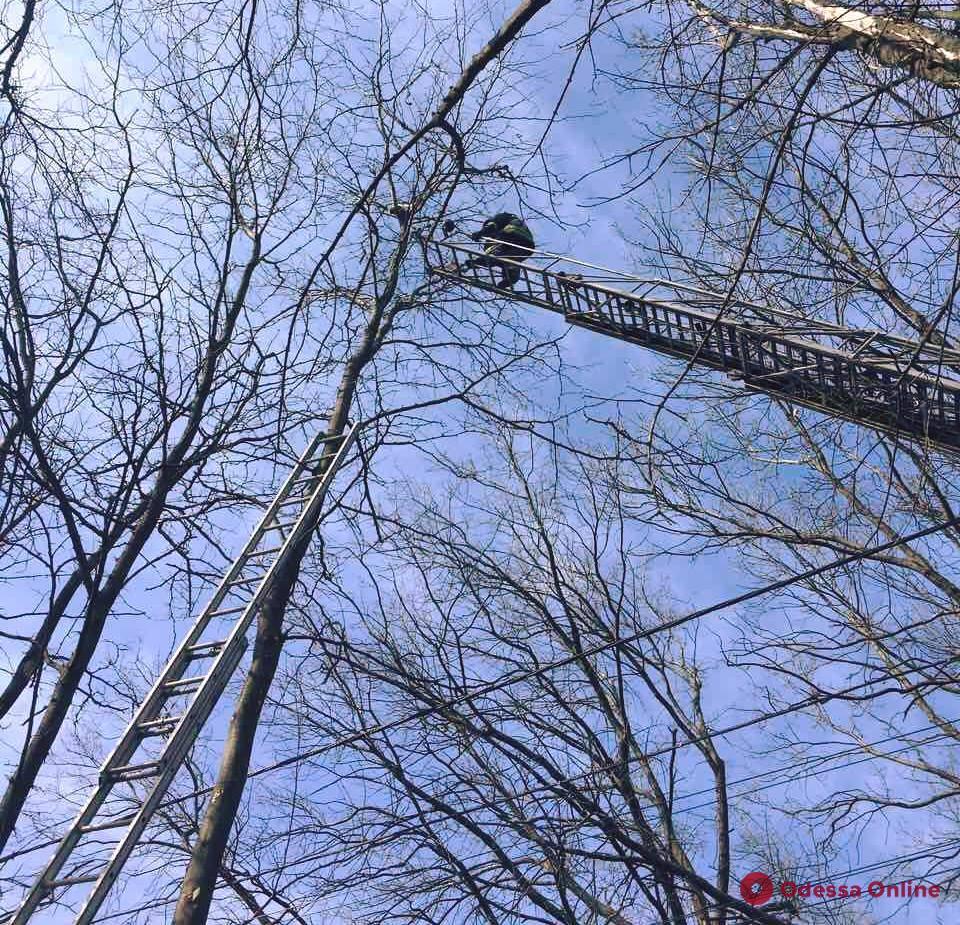 В Одессе спасатели снимали с дерева кота-верхолаза