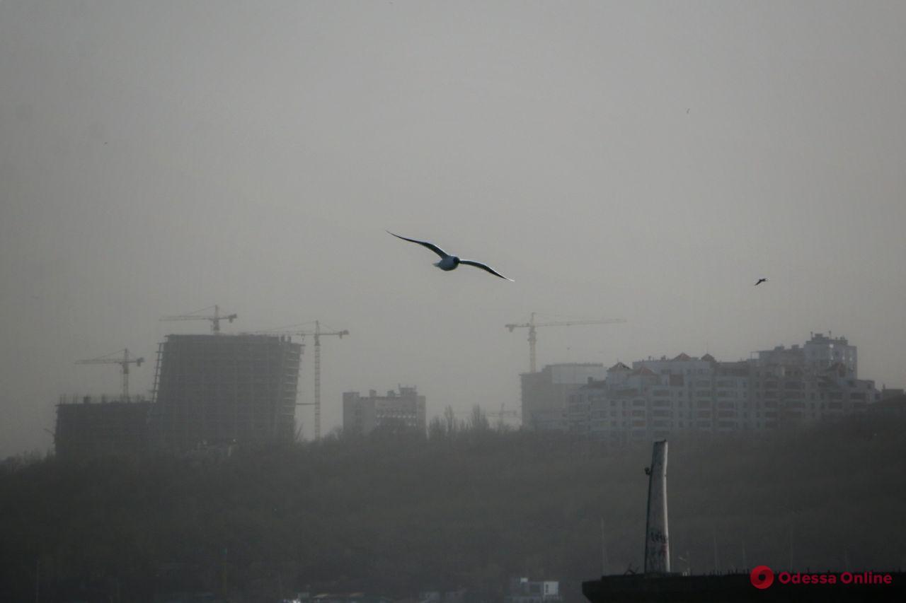 Пыльная буря по-одесски (фоторепортаж)