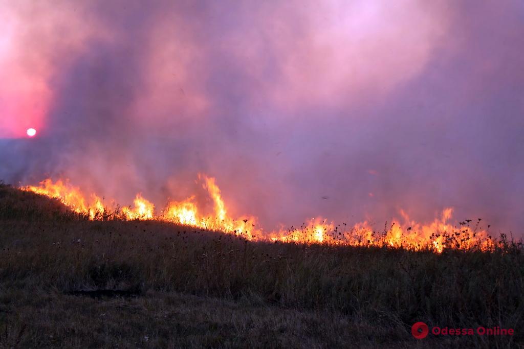 В Одесской области сгорели 4,5 гектара сухостоя