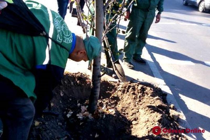 В одесском Горсаду высадят молодые деревья