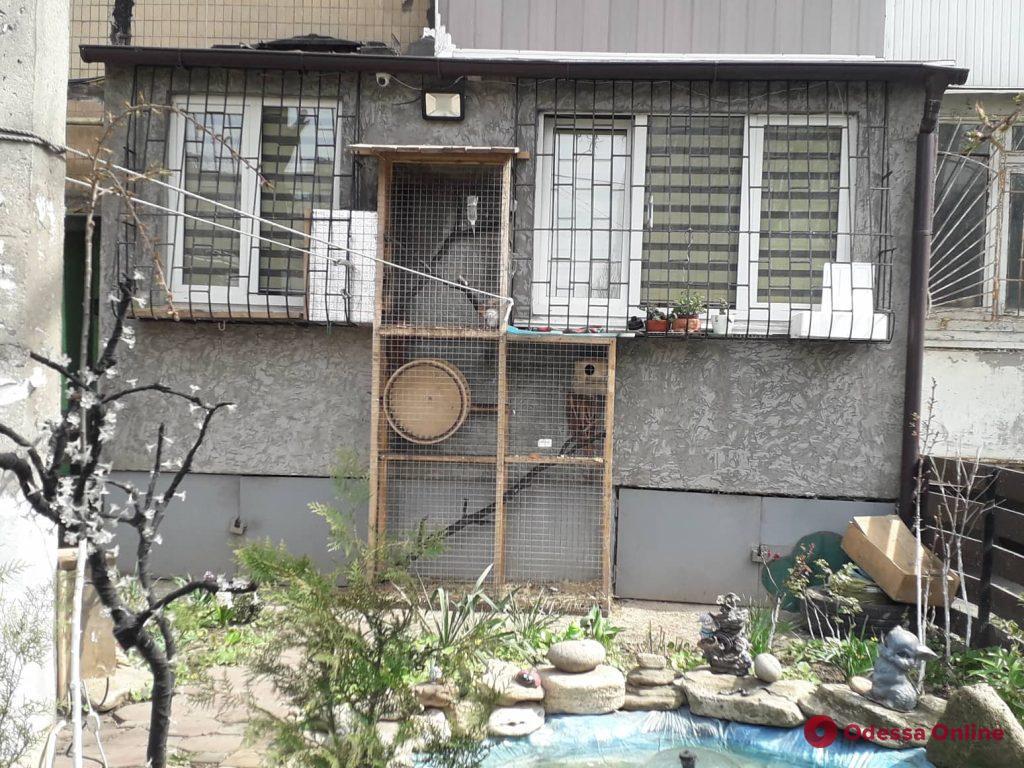 Светящийся фонтан и белки: жители одесской пятиэтажки создали релакс зону во дворе