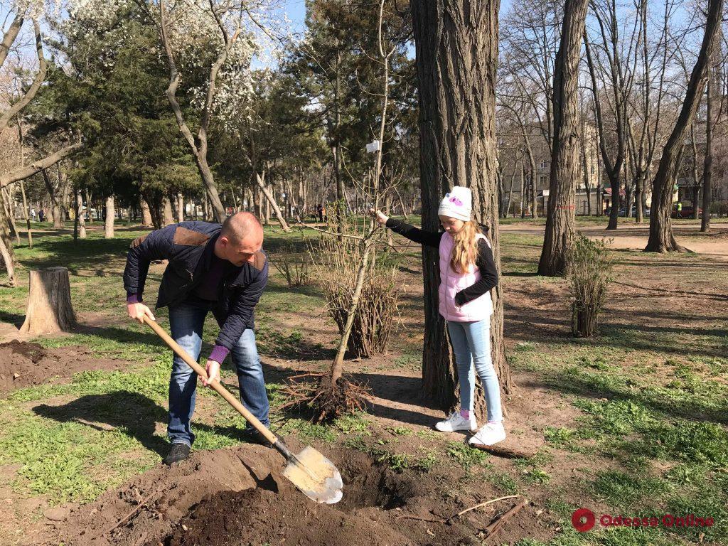 Ветераны АТО высадили в парке Горького аллею дубов