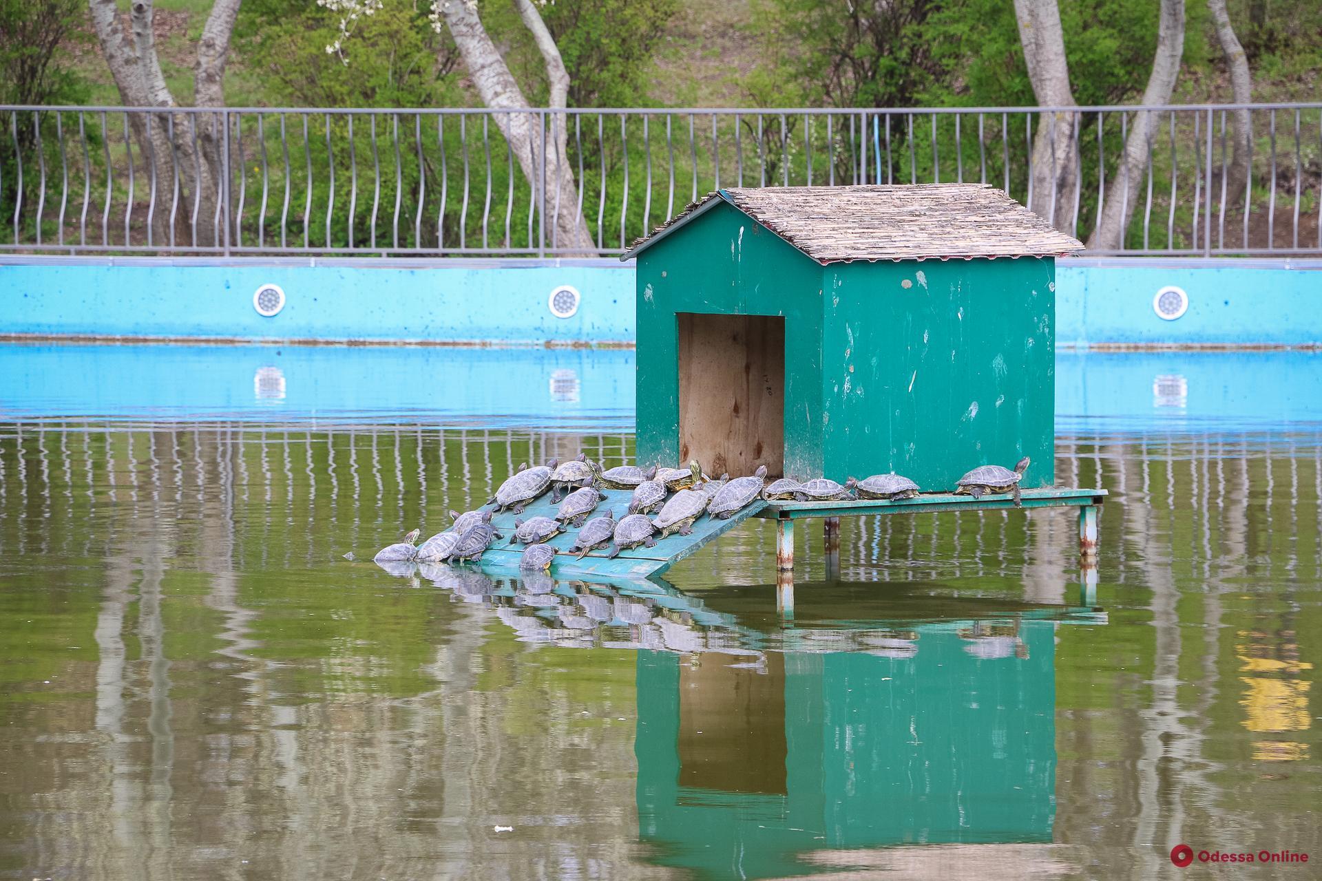 Черепахи, лебеди и утки: солнечный день в парке Победы (фоторепортаж)