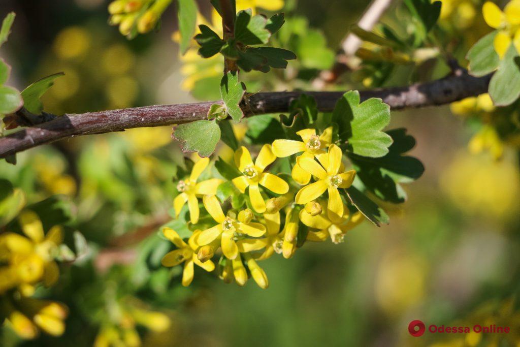 Весна прекрасна: в Одессе все цветет и пахнет (фоторепортаж)