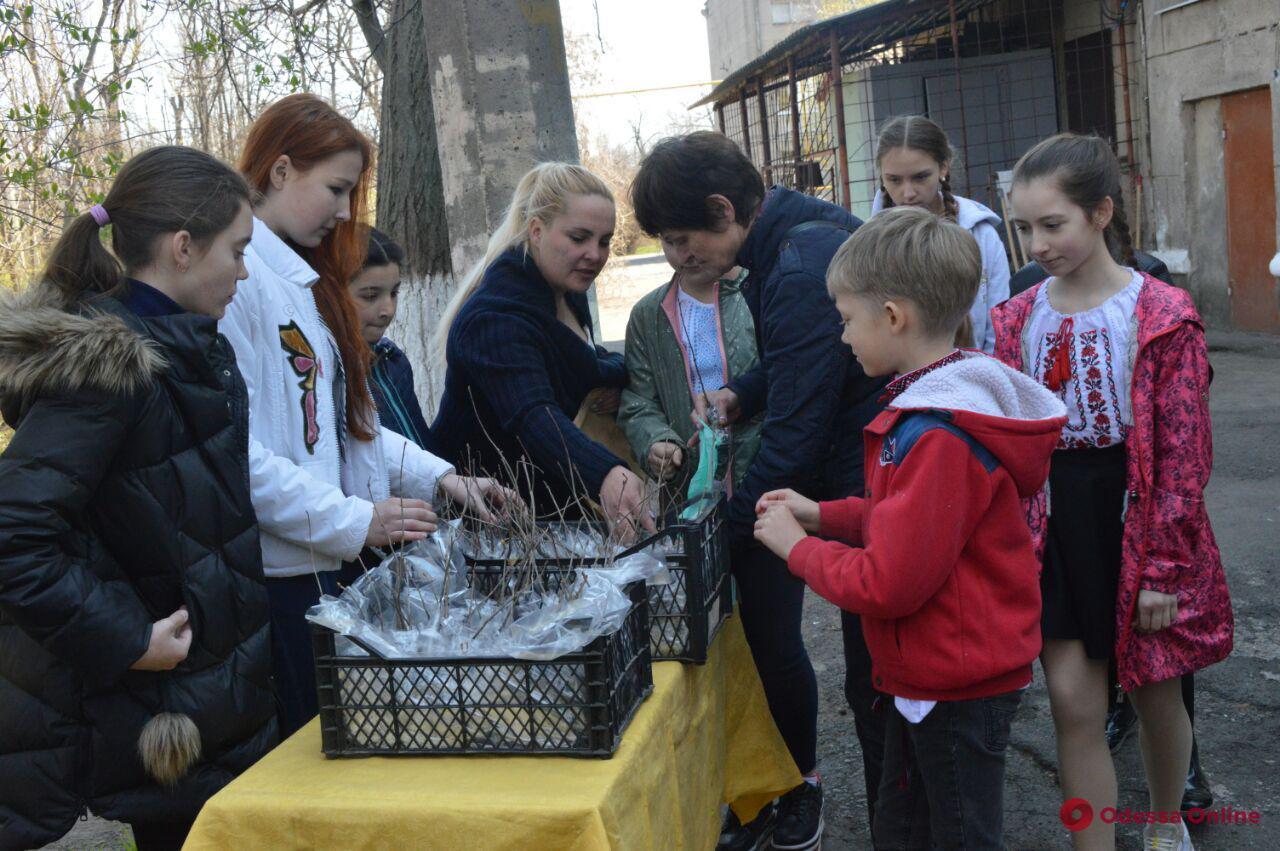 Одесские школьники высадили дубовую аллею в честь погибших бойцов