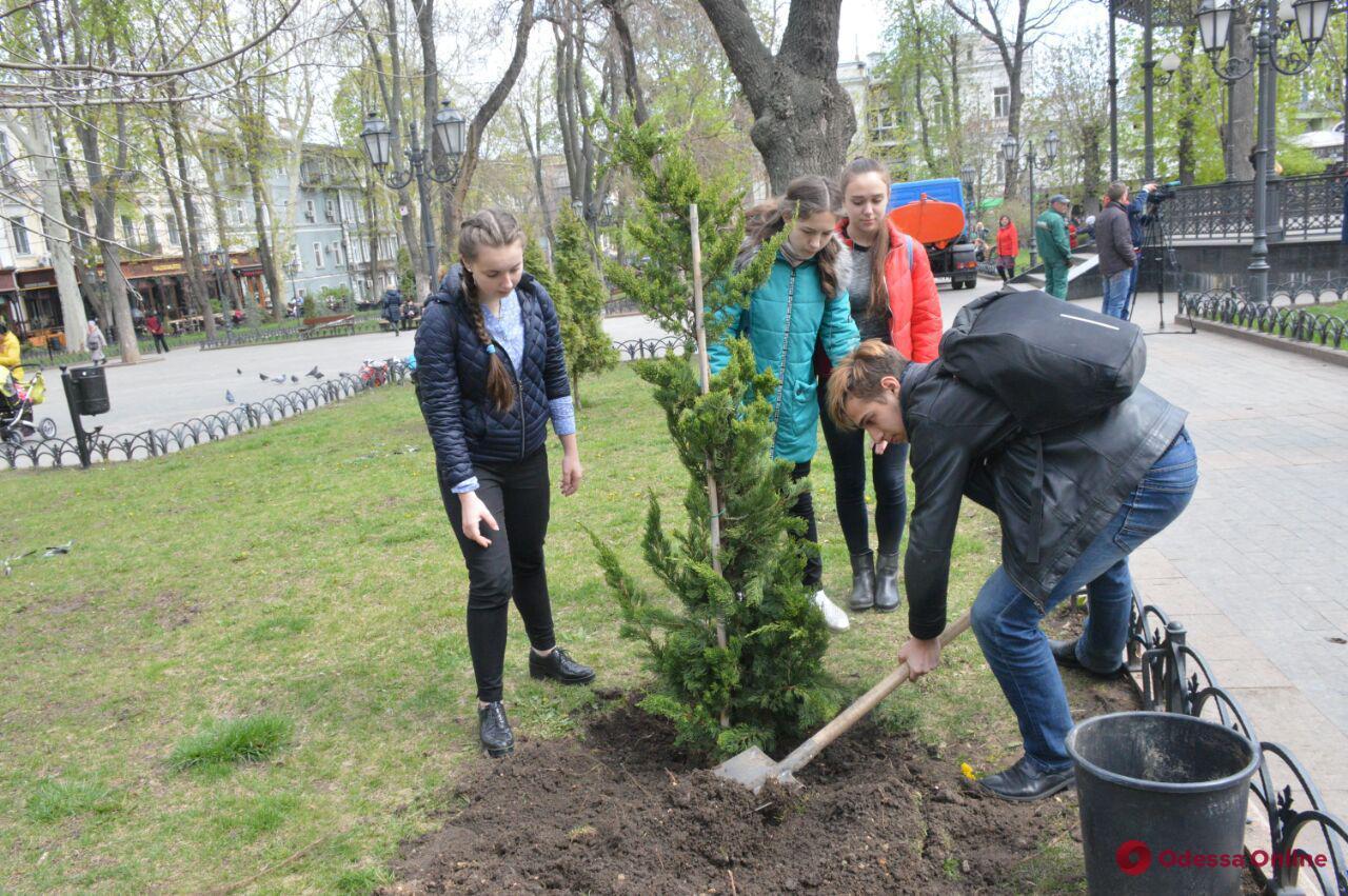 В Горсаду высадили хвойные деревья