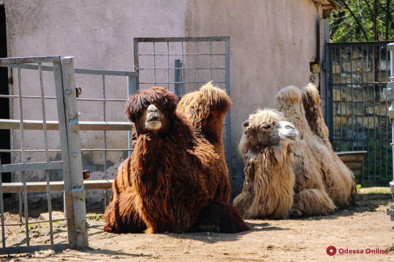 Весенний день в Одесском зоопарке (фоторепортаж)