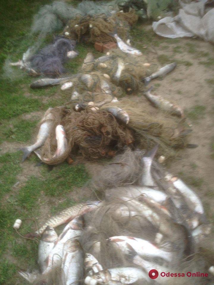 В Одесской области браконьер выловил рыбы на 28 тысяч
