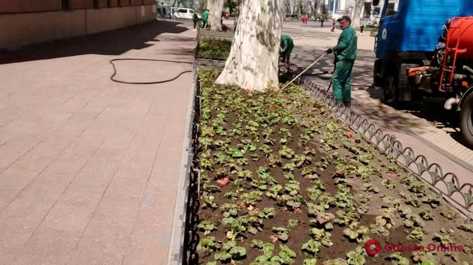 В Одессе начали высаживать летние цветы