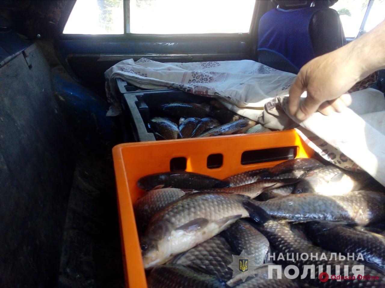 У жителя Одесской области в машине нашли больше центнера «левой» рыбы