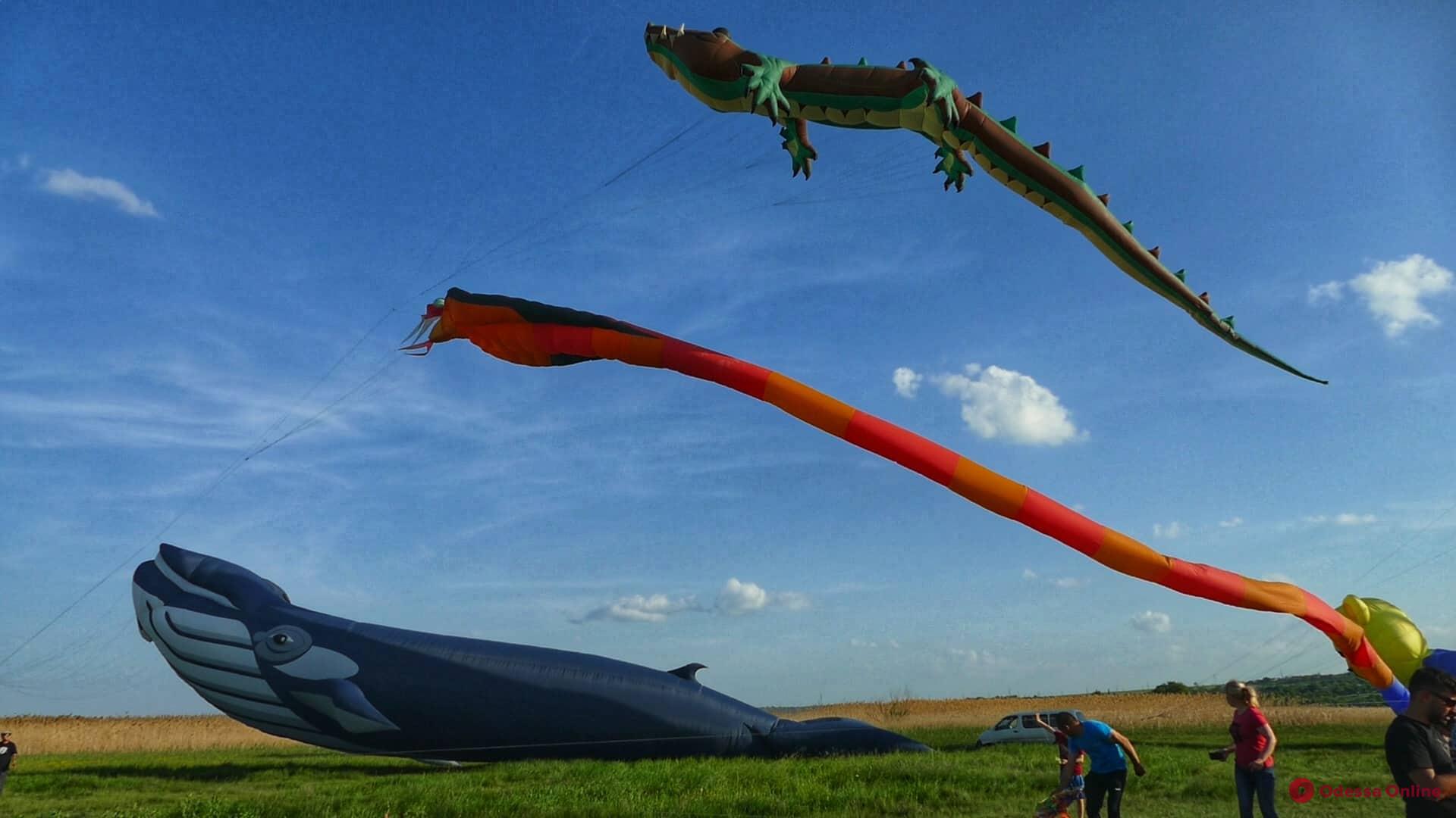 Крокодил и кит в небе: фестиваль воздушных змеев глазами одессита (фоторепортаж)