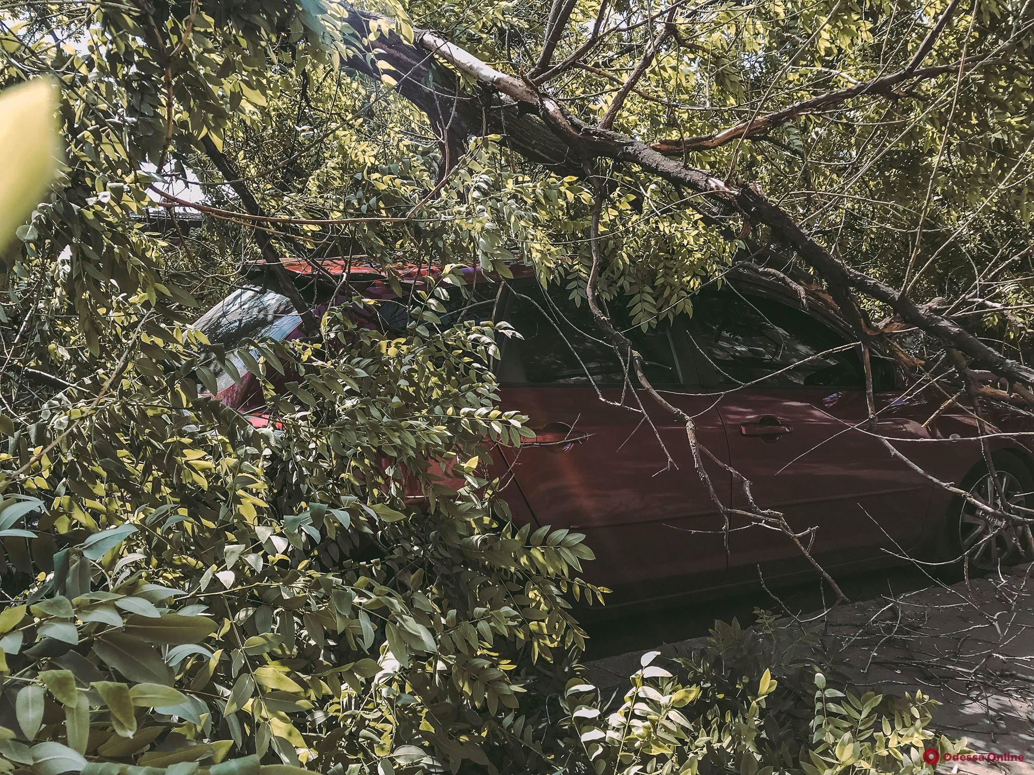 Одесса: На Дюковской ветка рухнула на автомобиль (фото)
