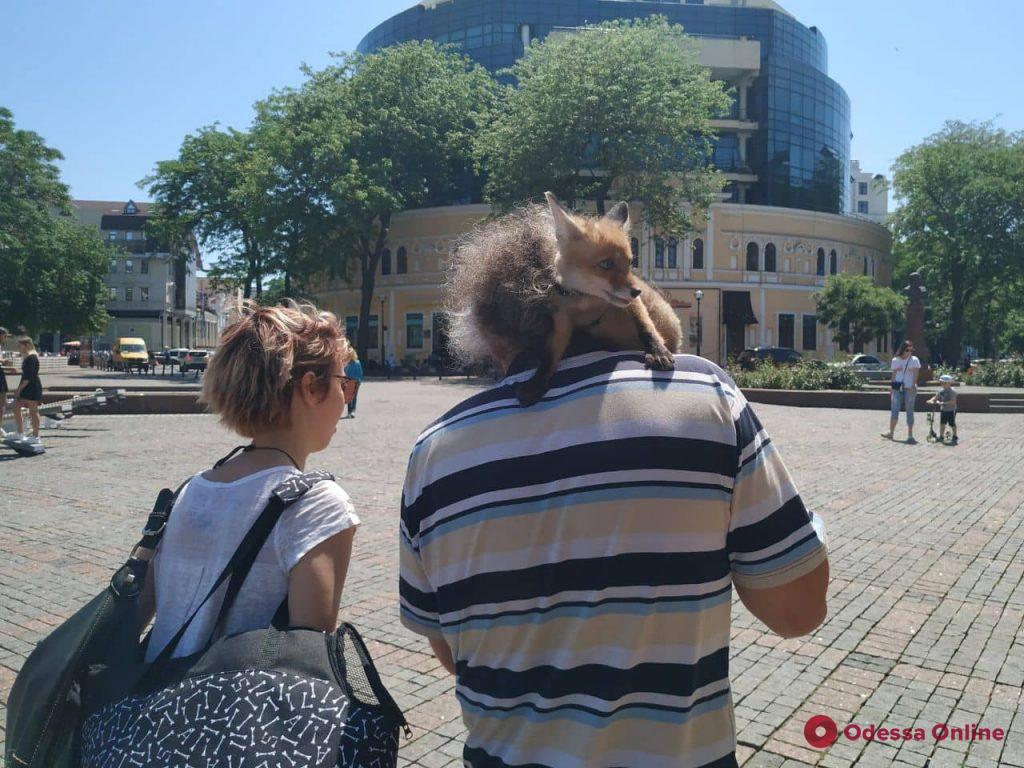 В одесской семье живет лисенок, который гуляет по Дерибасовской и «ведет» свой инстаграм (фото)