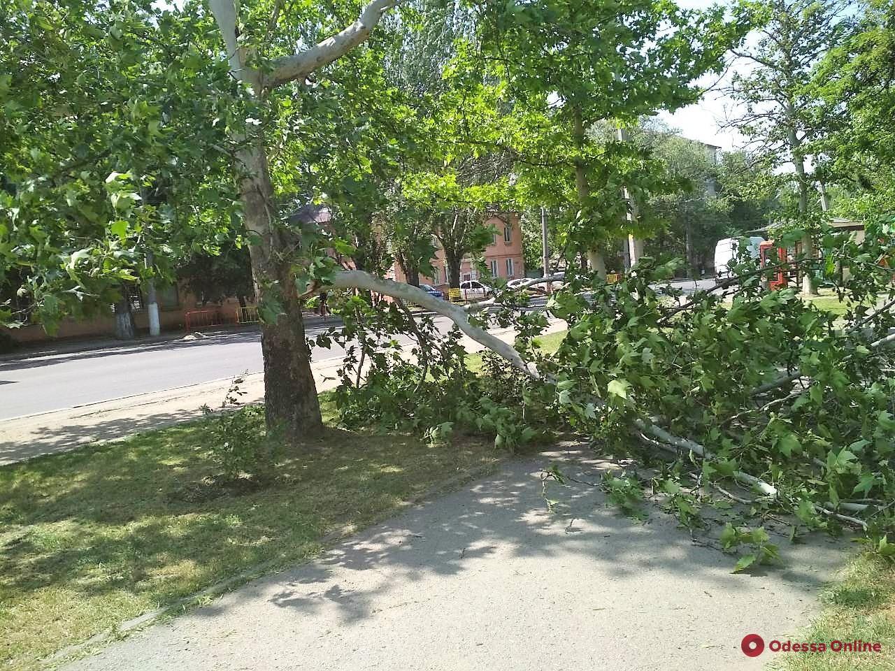 В Одессе сильный ветер повалил девять деревьев