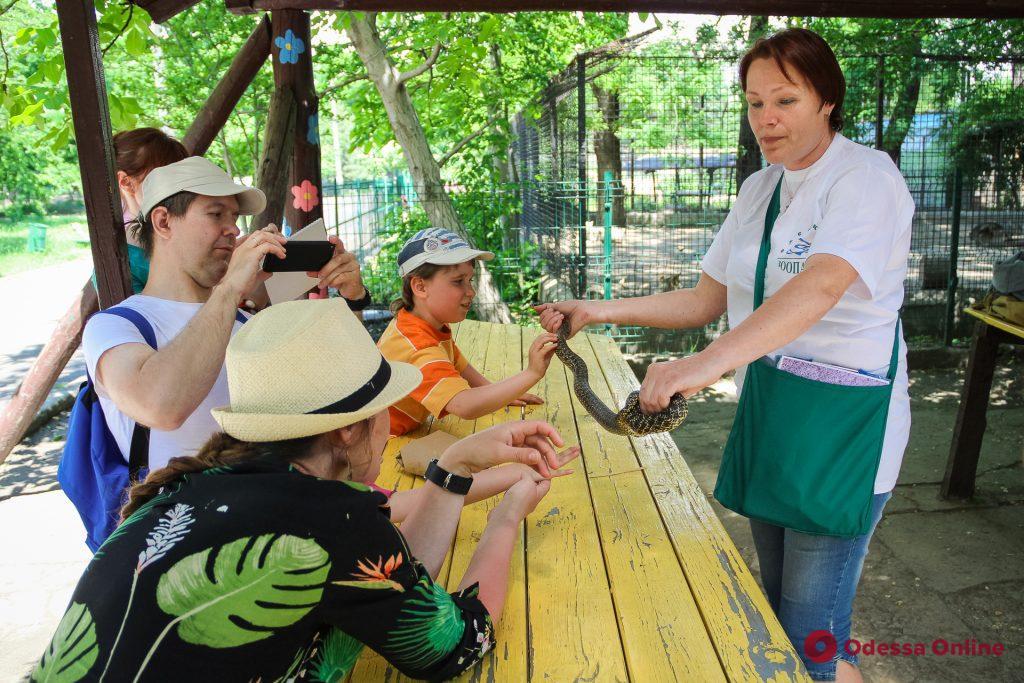 В Одесском зоопарке прошла черепашья гонка (фото)