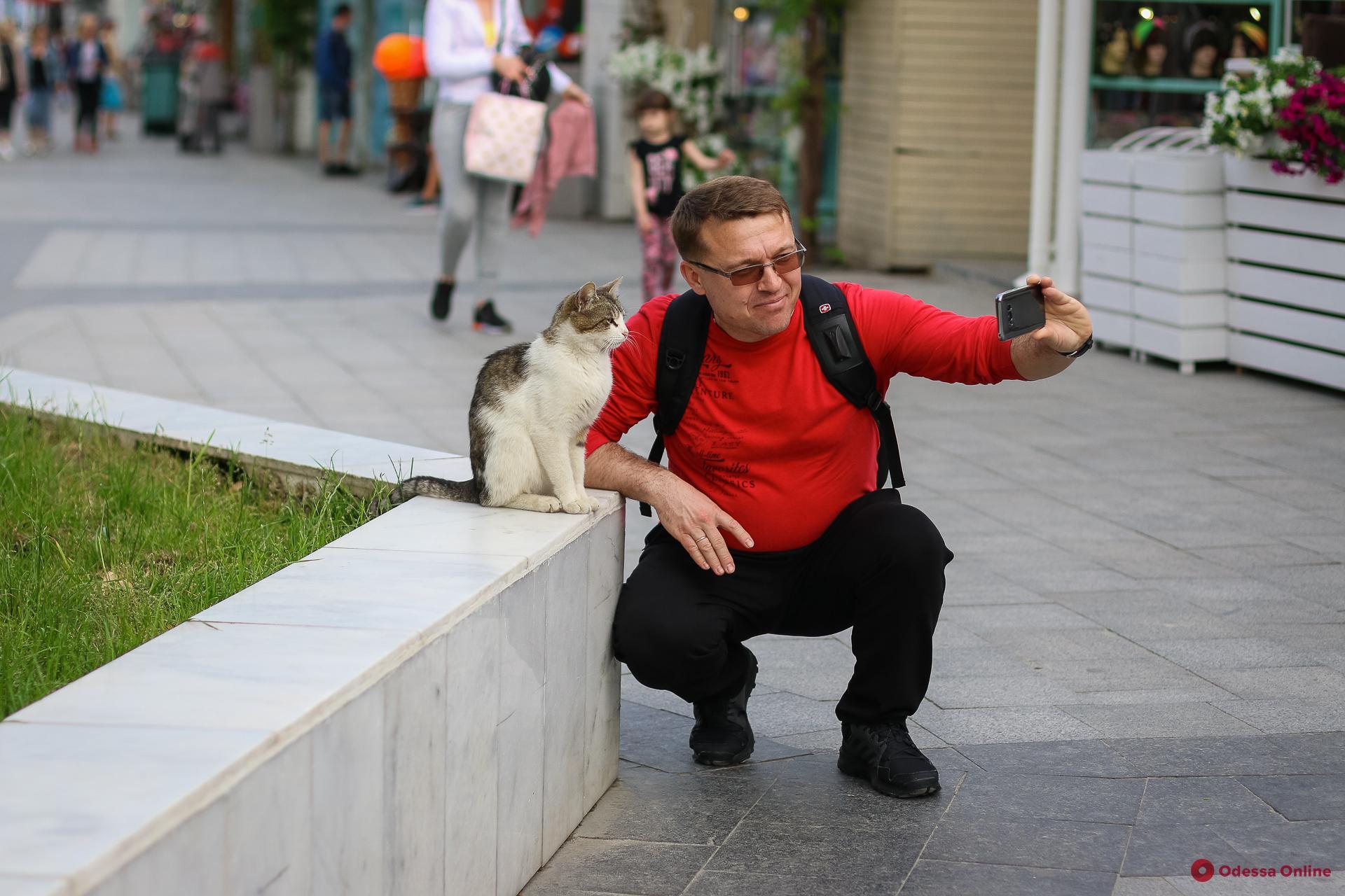 Одесские коты готовятся к лету (фоторепортаж)