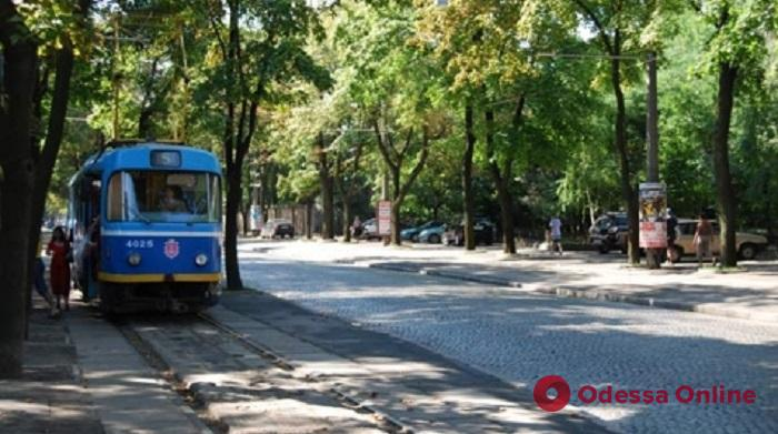 На Французском бульваре из-за упавшего дерева не ходят трамваи