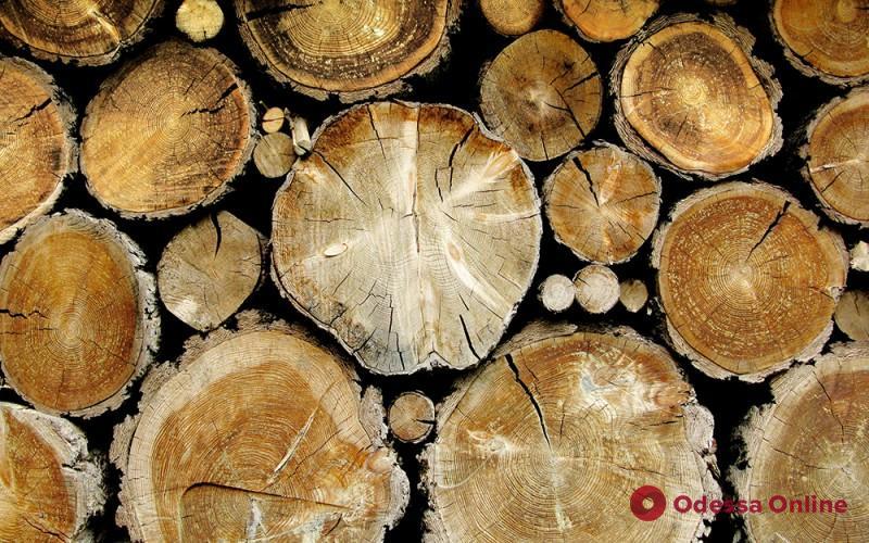 Одесская область: чиновников лесхоза будут судить за незаконный сбыт древесины