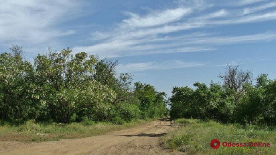 В лесополосе под Одессой нашли повешенным мужчину