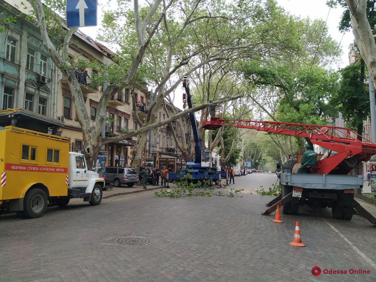 Одесса: на Пушкинской перекрыли дорогу из-за упавшей ветки