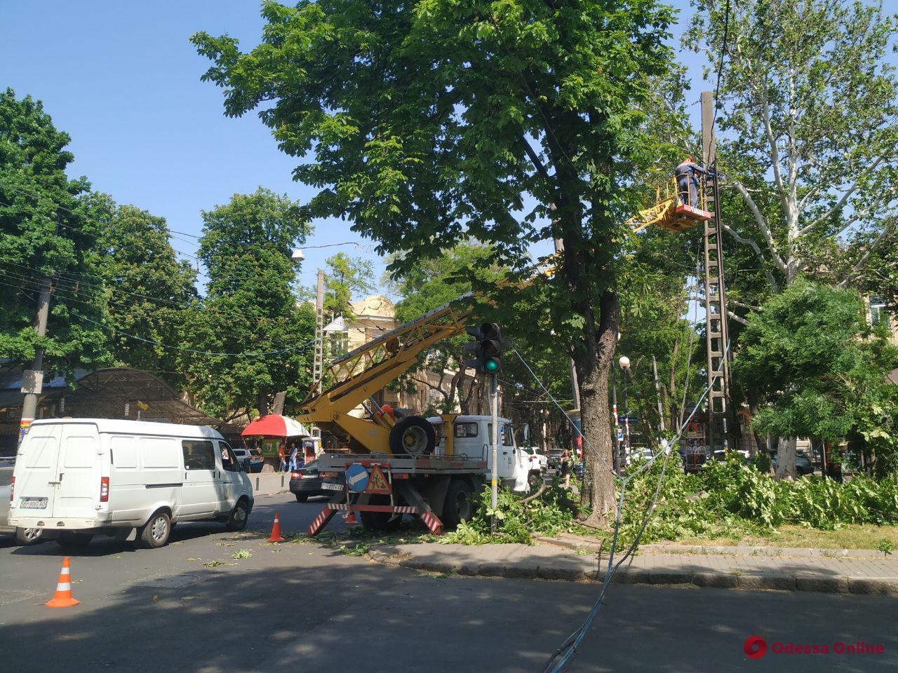 На Александровском проспекте упавшая ветка каштана оборвала провода