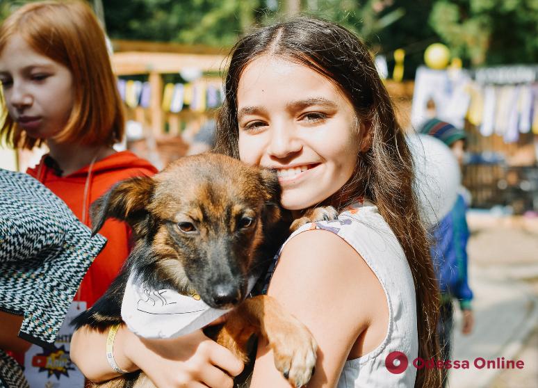 В Одессе пройдет фестиваль для животных из приюта