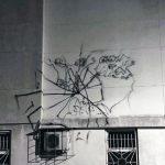 spider (7)