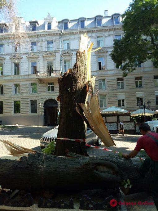 За минувшие сутки шквальный ветер повалил в Одессе 23 дерева
