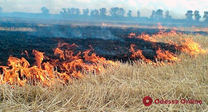 За сутки в Одесской области сгорели семь гектаров сухой травы