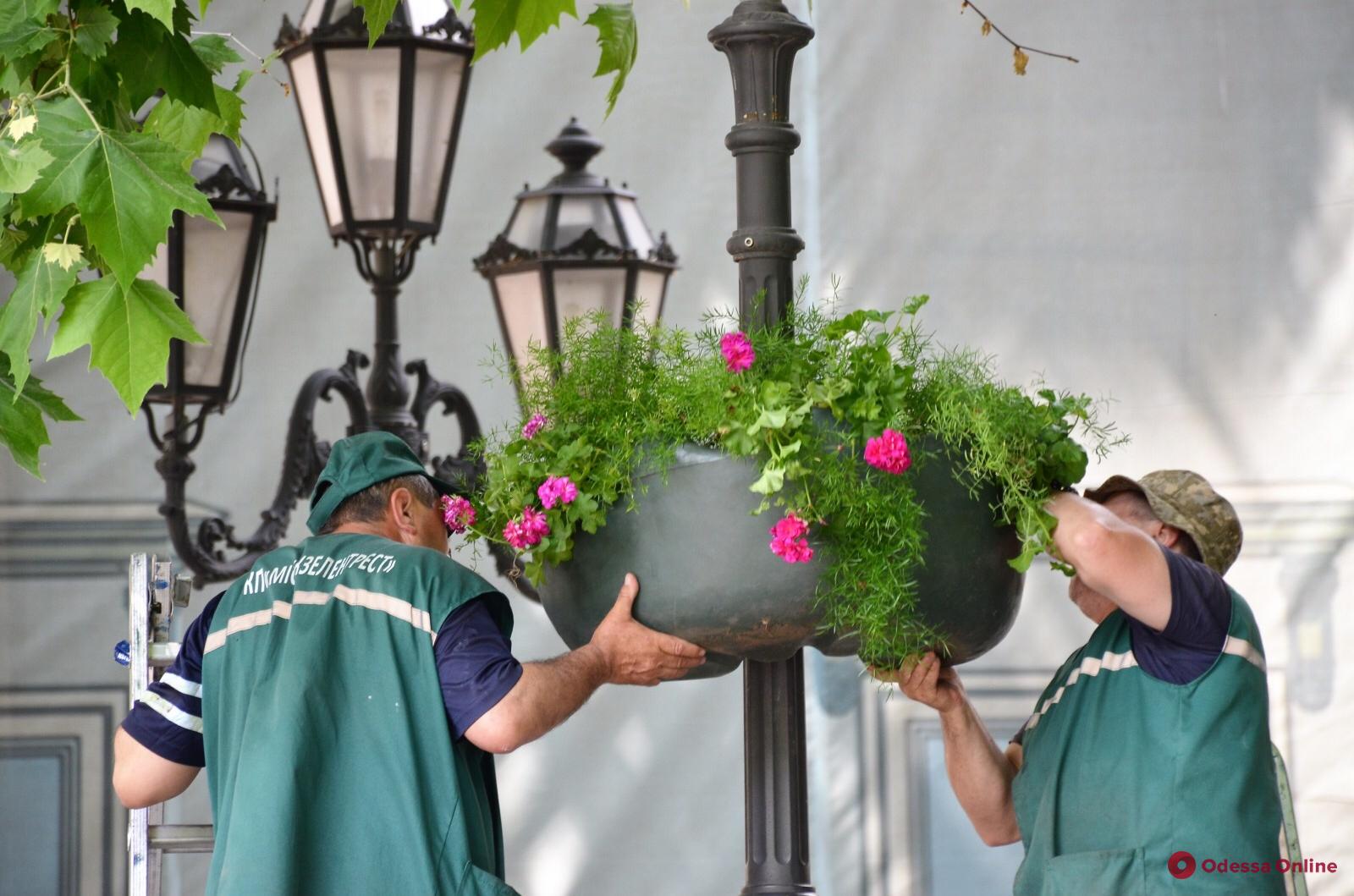 Одессу украшают цветами в подвесных чашах