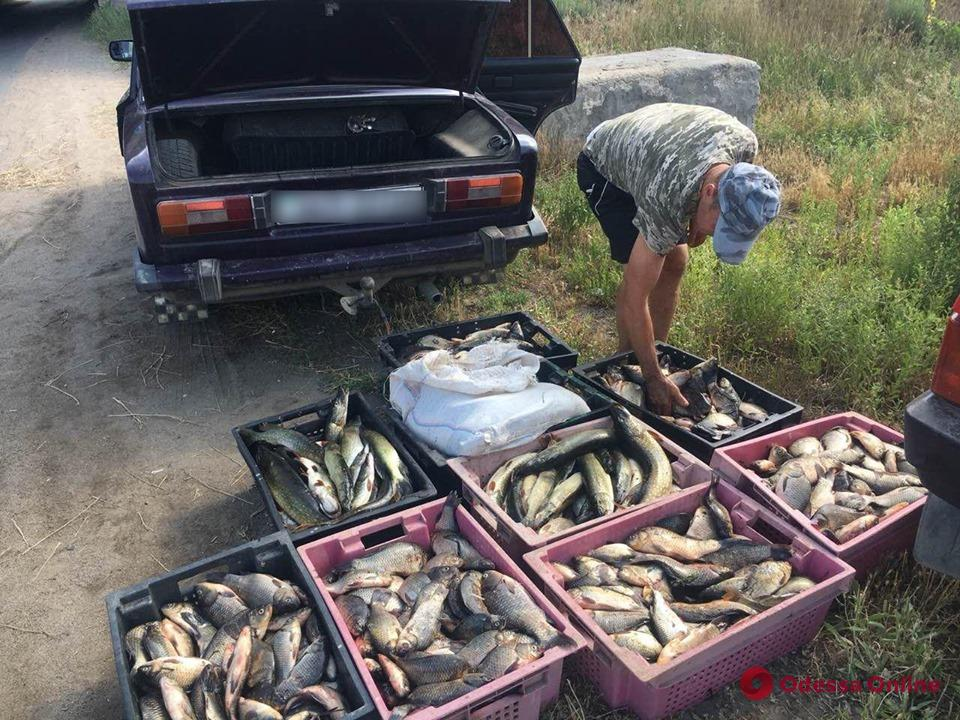 Незаконный улов: житель Одесской области перевозил почти 200 килограммов рыбы