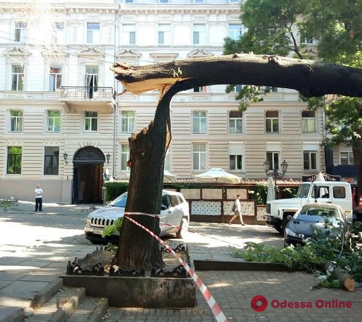 В Одессе ночью шквальный ветер повалил шесть деревьев (фото, обновлено)