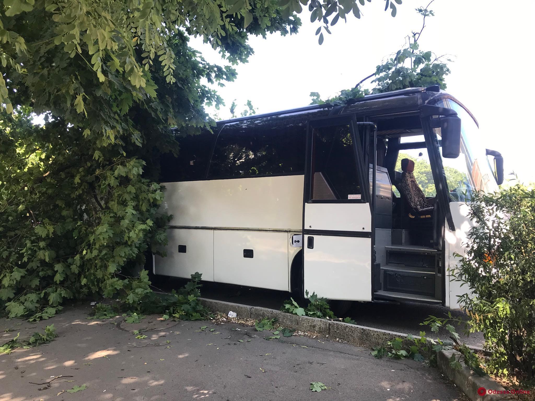 В Одессе крупная ветка упала на автобус