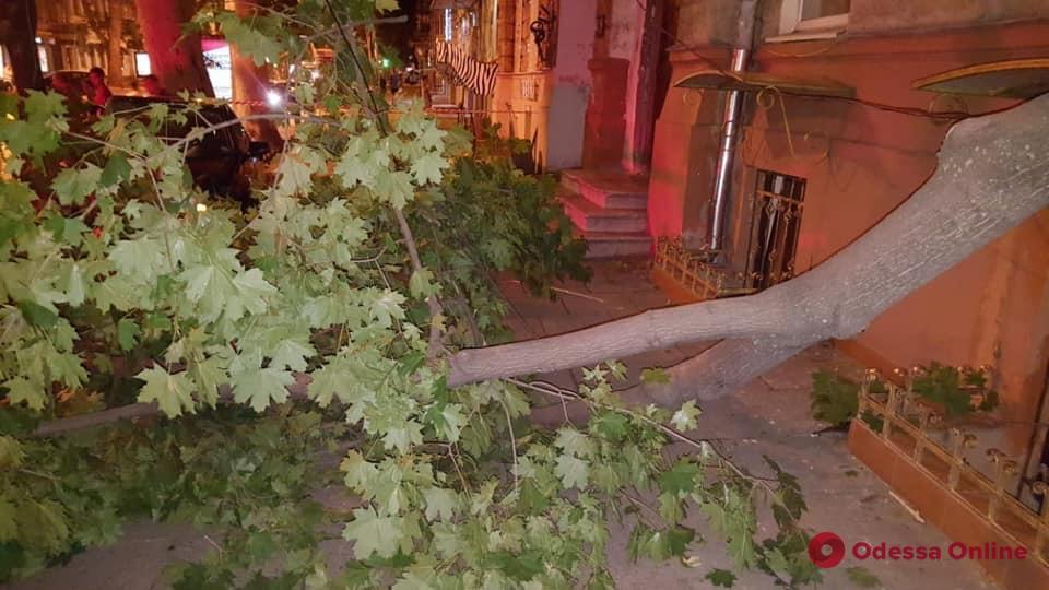 ДТП в центре Одессы: сбитое дерево упало на парня (обновлено)